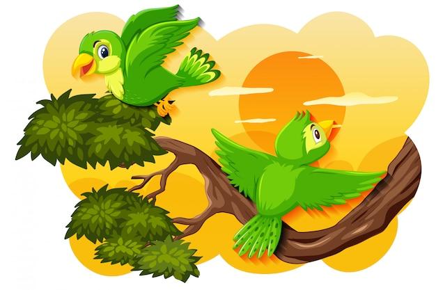 Vogel in de scène van de aardzonsondergang