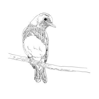 Vogellijn vector