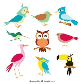 Vogels collectie