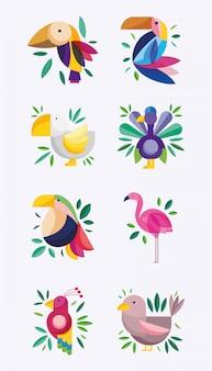 Vogels exotisch tropisch gebladerte groen natuur fauna flora