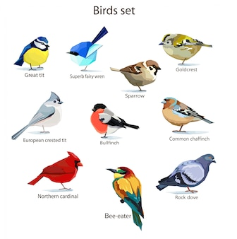 Vogels instellen illustratie