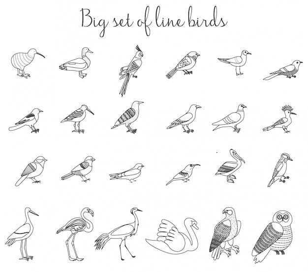 Vogels schetsen dunne lijn illustratie iconen.