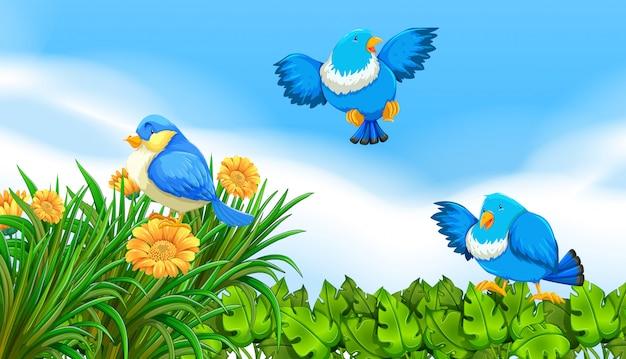 Vogels vliegen in de tuin