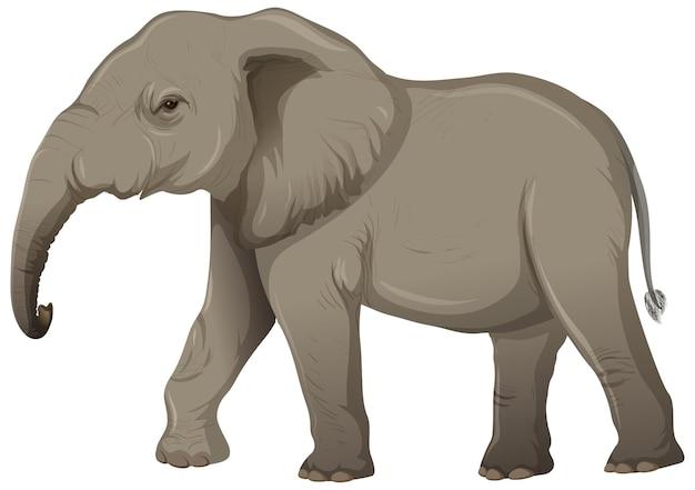 Volwassen olifant zonder ivoor in cartoonstijl op witte achtergrond