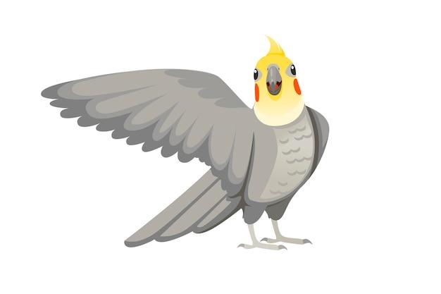 Volwassen papegaai van normale grijze valkparkiet op zoek naar je en fladderende zijn vleugel (nymphicus hollandicus, corella) cartoon vogel ontwerp platte vectorillustratie geïsoleerd op een witte achtergrond.