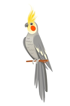 Volwassen papegaai van normale grijze valkparkiet zittend op tak (nymphicus hollandicus, corella) cartoon vogel ontwerp platte vectorillustratie geïsoleerd op een witte achtergrond.