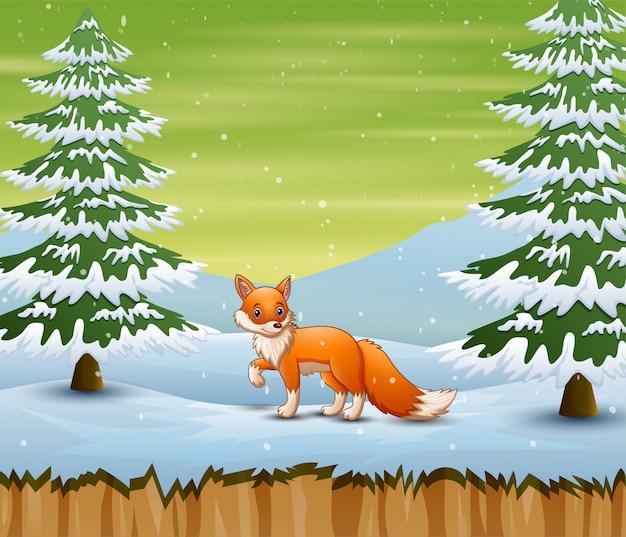 Vos in het de winterbos die op een prooi jagen