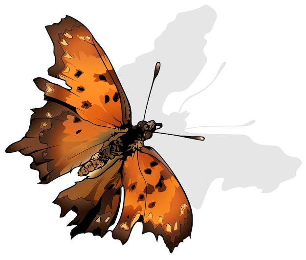Vraagteken vlinder polygonia ondervraging is