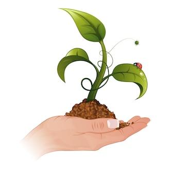 Vrouw hand met de jonge groene spruit uit de grond met waterdruppels en lieveheersbeestje, vectorillustratie