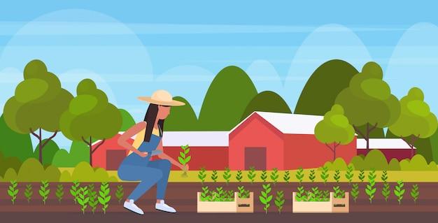 Vrouwelijke boer aanplant landbouw zaailingen vrouw landbouwarbeider tuinieren eco landbouwconcept landbouwgrond platteland landschap volledige lengte horizontaal