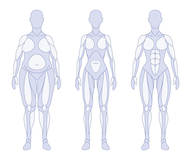 Vrouwelijke lichaamstypes anatomie voorste positie