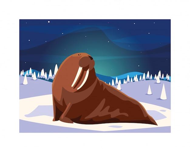 Walrus op de noordpool