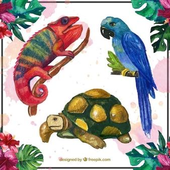 Watercolor dieren set