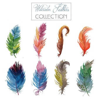 Watercolour feather collection