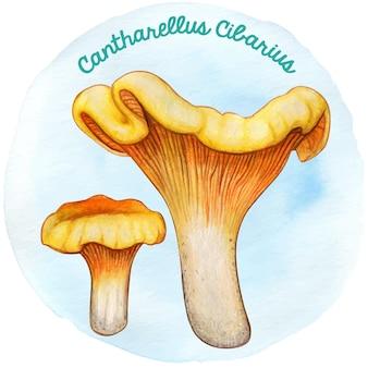 Watercoor handgetekende paddenstoel cantharellus cibarius