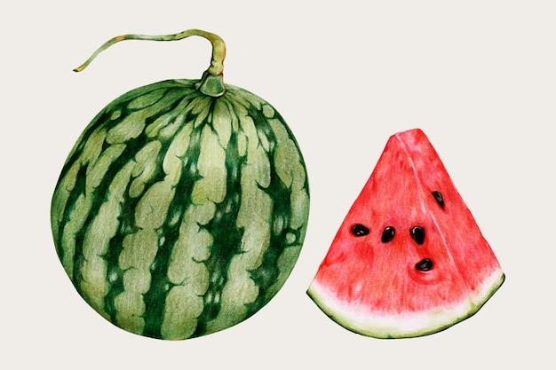 Watermeloen handgetekende vector voedsel schilderij