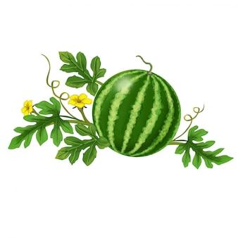 Watermeloen met bloemen