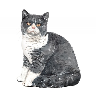 Waterverf cat british shorthair sitting tilt.