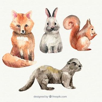 Waterverf collectie van kleine dieren