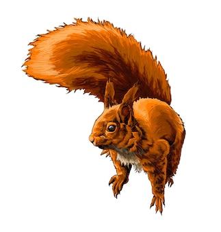 Waterverf euraziatische rode eekhoorn op wit