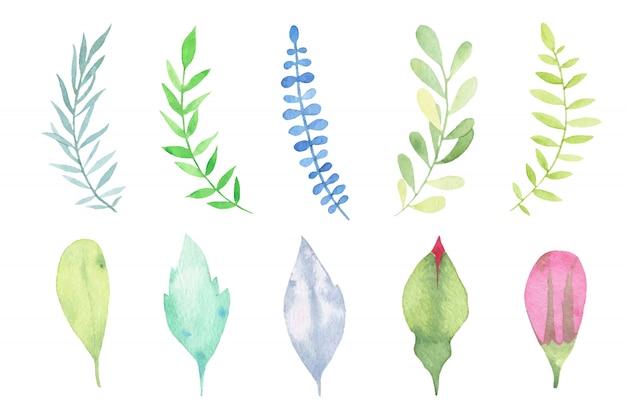 Waterverfhand geschilderde bladeren geplaatst die op wit worden geïsoleerd