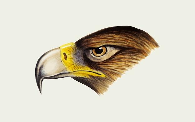 Wedge-de steel verwijderde van eagle-illustratie
