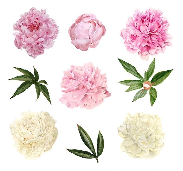 Weelderige pioenrozen bloemen, bladeren en knoppen, bloemen set
