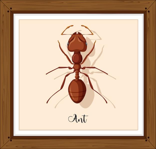 Werken mier op houten frame