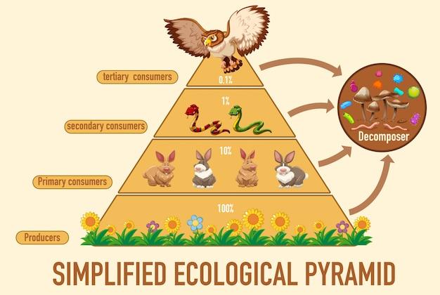 Wetenschap vereenvoudigde ecologische piramide