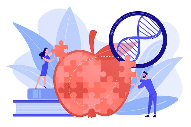 Wetenschappers doen appelpuzzel. genetisch gemodificeerd organisme en gemanipuleerd organisme, moleculair engineering concept op witte achtergrond. roze koraal bluevector geïsoleerde illustratie