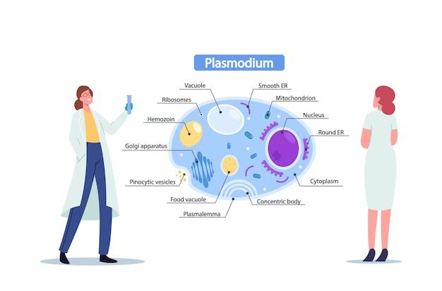 Wetenschappers vrouwelijk karakter met reageerbuis leren plasmodium parasieten anatomie. tiny microbiology doctor bij enorme infographics die cel binnenaanzicht presenteren. cartoon mensen vectorillustratie
