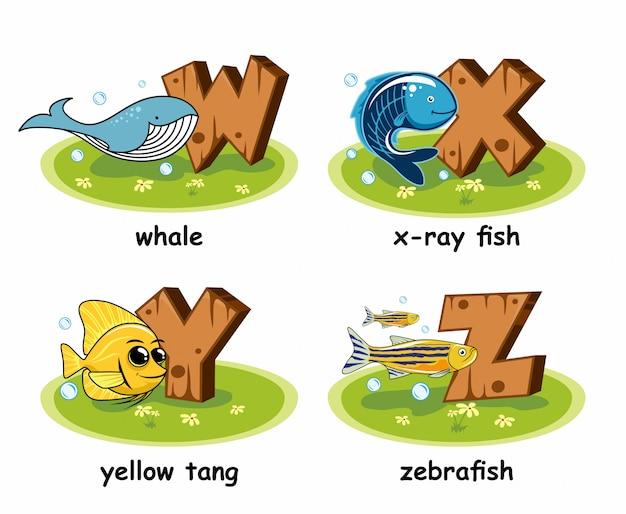 Whale x-ray tetra fish yellow tang zebrafish houten alfabet