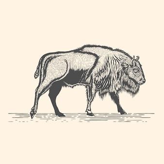 Wild bison hand getekend gravure stijl