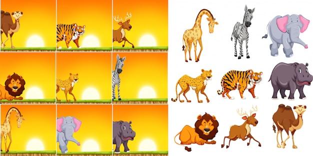 Wild dier in zonsondergangscène