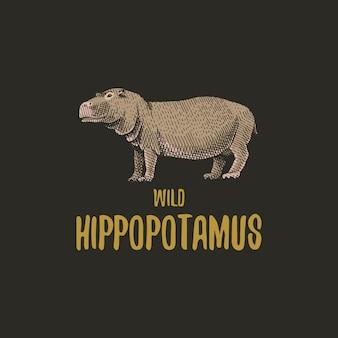Wild nijlpaard gegraveerde hand getrokken in oude schets stijl, vintage dieren logo