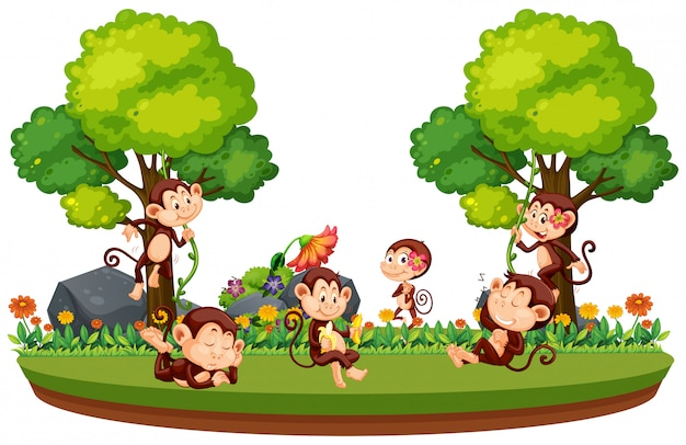 Wilde aap in het bos