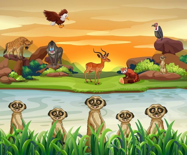 Wilde dieren bij de rivier
