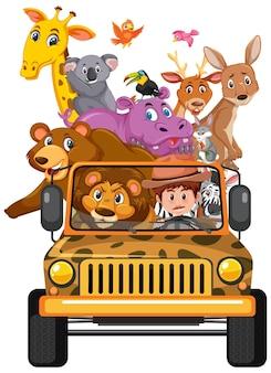 Wilde dieren in de jeepauto die op witte achtergrond wordt geïsoleerd