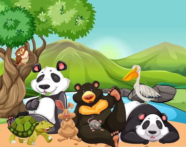Wilde dieren in het veld