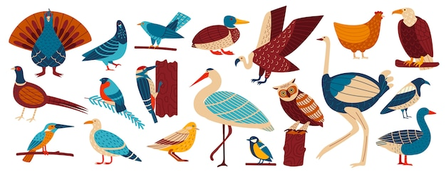 Wilde en huisvogels, gevogelte instellen cartoon illustratie, verzameling van europese vogels duif, kraai, kauw, meeuw en uil, kip.