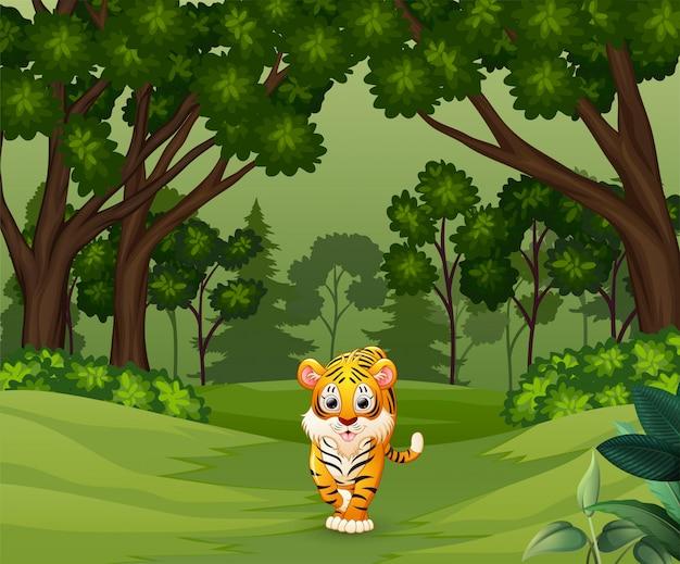 Wilde enge tijger die in het bos loopt
