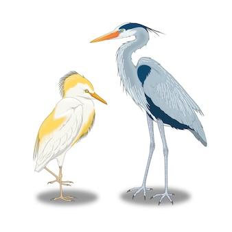 Wilde grote vogels die in de buurt van het water leven