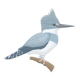 Wilde kleine bosvogel op een tak