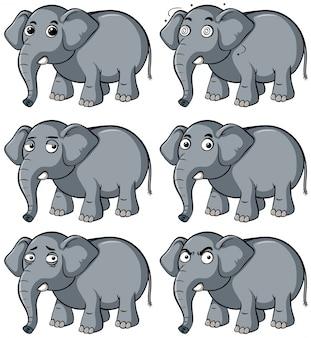 Wilde olifant met verschillende gezichtsuitdrukkingen