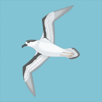 Wilde vliegende zeemeeuw