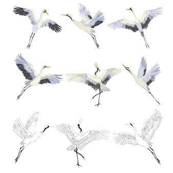 Wilde vogels tijdens de vlucht. dieren in de natuur of in de lucht. kranen of grus en ooievaar of shadoof en ciconia met vleugels. gegraveerde schets hand getekend in vintage stijl.