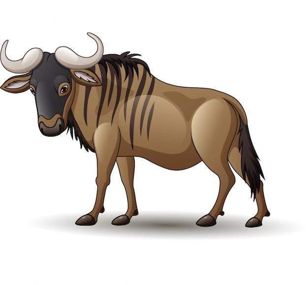 Wildebeest geïsoleerd op witte achtergrond