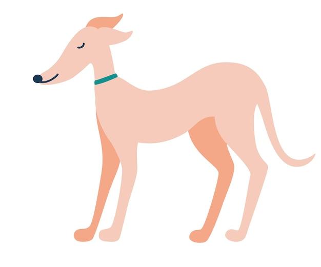 Windhond hond. engelse hond. greyhounds karakters. mooie sierlijke hondenstandaards. platte vectorillustratie.