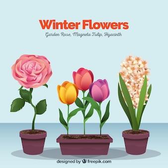Winterbloemen in bloempotten