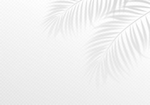 Wit tropisch behang